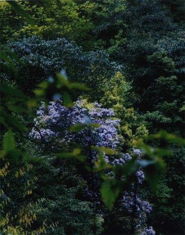 境内林木葱郁苍翠,动植物种类繁多.