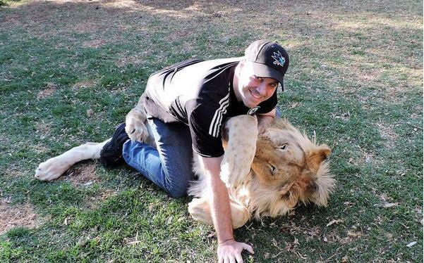 男子遭狮子热情扑倒 误被当交配对象 - 真光 - 真光 的博客