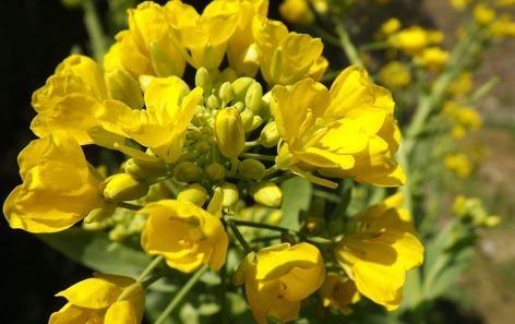 天天盛开的花歌谱