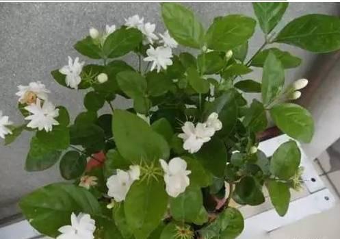 养花大全45集,收藏起来,什么花都能养好!送给爱养花的朋友 - 平淡无奇 - 平淡无奇博客