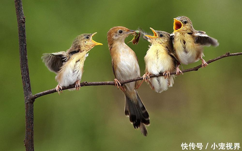 这种鸟类曾是四害之一,经常偷吃庄稼,现已成保护动物