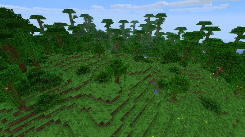 Jungle Edge.jpg