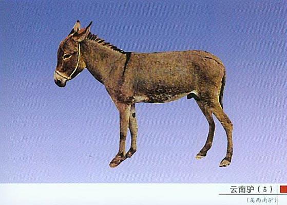 可爱真驴头像图片