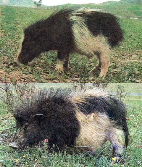 不同动物间合作关系的图片