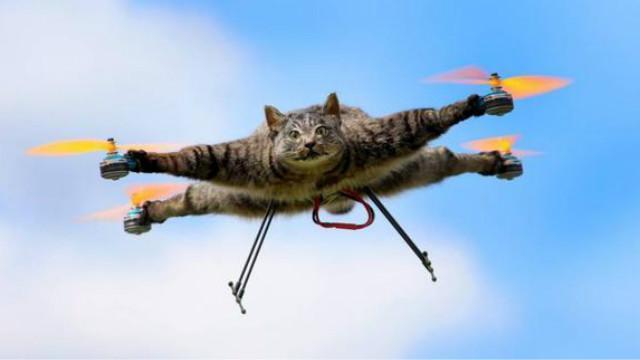 天边飘来一只死猫!艺术家用动物尸体做无人机