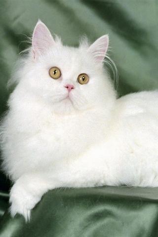 壁纸可爱的猫下载