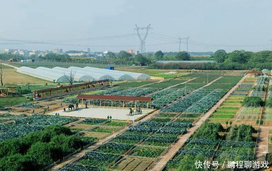 辉南县:特色农业富了一方百姓