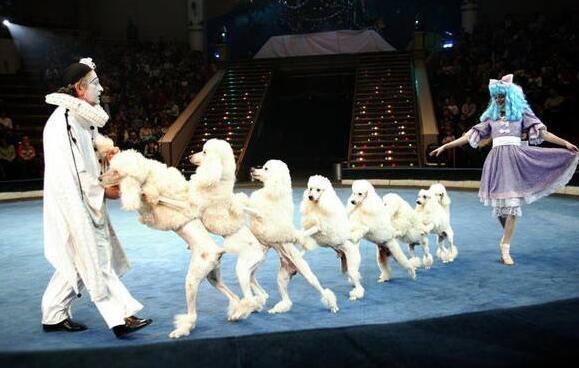 屌爆啦 皇家马戏团将携大批动物明星来南充