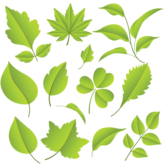背景 壁纸 绿色 绿叶 设计 矢量 矢量图 树叶 素材 植物 桌面 550_550