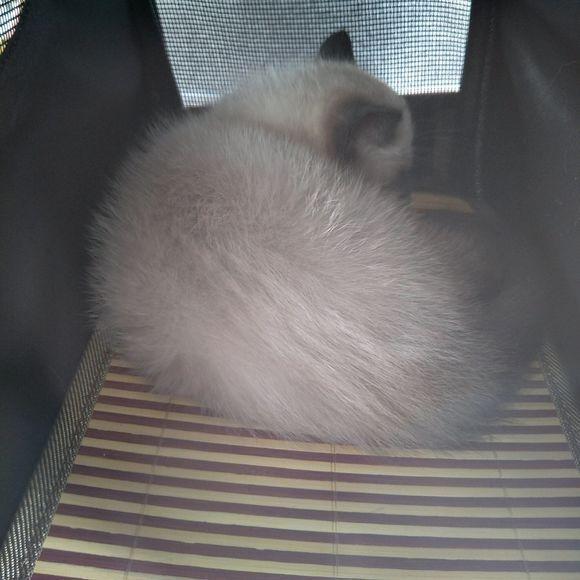 这只加菲猫看起来怪怪的,仔细一看,主人:挖煤的加菲