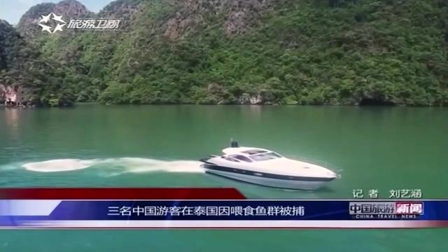 三名中国游客在泰国因喂食鱼群被捕