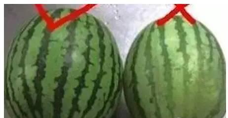 西瓜不能用勺子挖着吃:不知道就危险啦 - 一统江山 - 一统江山的博客