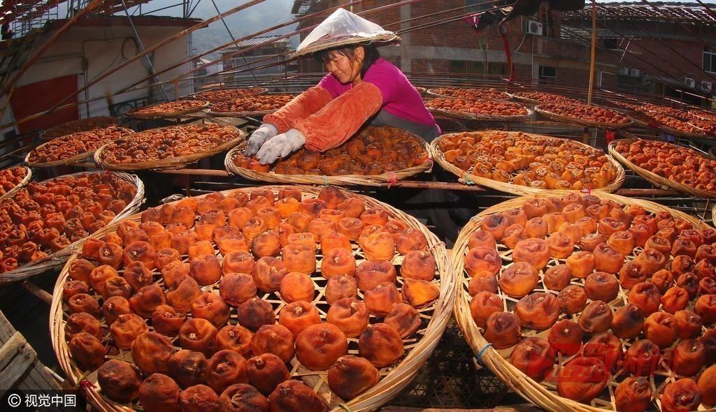 """福建泉州:村民屋顶晒柿饼 满村尽是""""黄金屋"""" - 周公乐 - xinhua8848 的博客"""