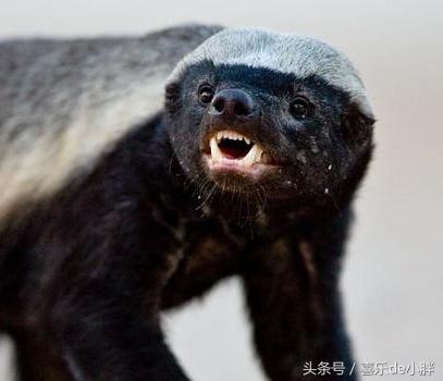 动物世界-尖牙猛兽(4)