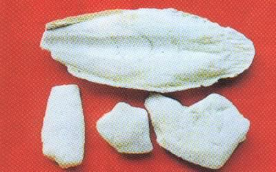 海螵蛸本品为乌贼科动物无针乌贼sepiella