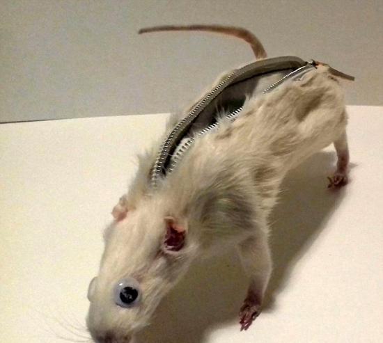 【转】北京时间       大学生用老鼠尸体制作笔袋 受万千网友指责 - 妙康居士 - 妙康居士~晴樵雪读的博客