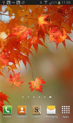 五彩的树叶壁纸(来自:)
