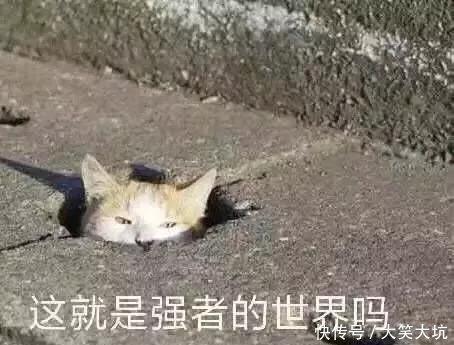 如果熊孩子都像表情里的萌娃一样可爱,那该中国图片惊讶表情美女图片