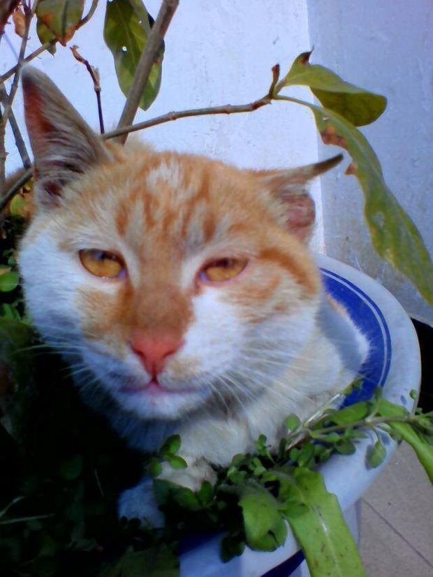 你观察过小猫的眼睛吗猫的眼睛在中午和晚上会有什么