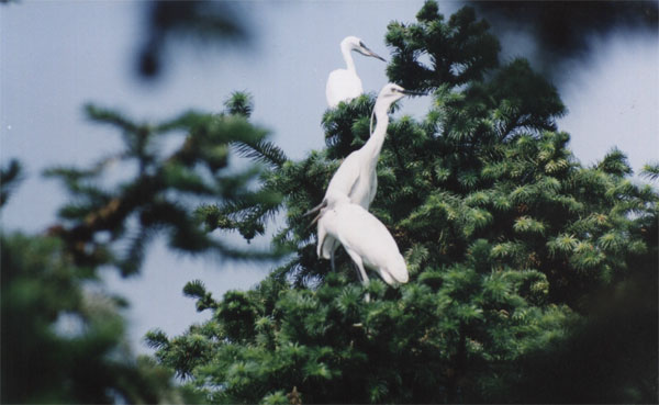 白鹭岛生态旅游风景区位于安徽省滁州市来安县城西北