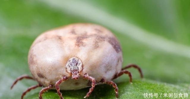 家里床上螨虫成窝?只需一个土方法,你家床上不再有螨虫