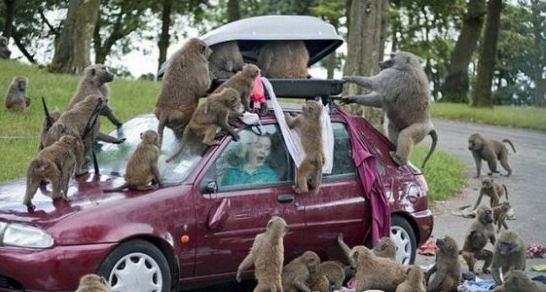 都成精了哈:动物袭击人类搞笑瞬间 - 一统江山 - 一统江山的博客