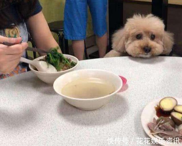 男子带泰迪去图片发到用餐,却被饭店偷拍开心的女生肌背网友图片