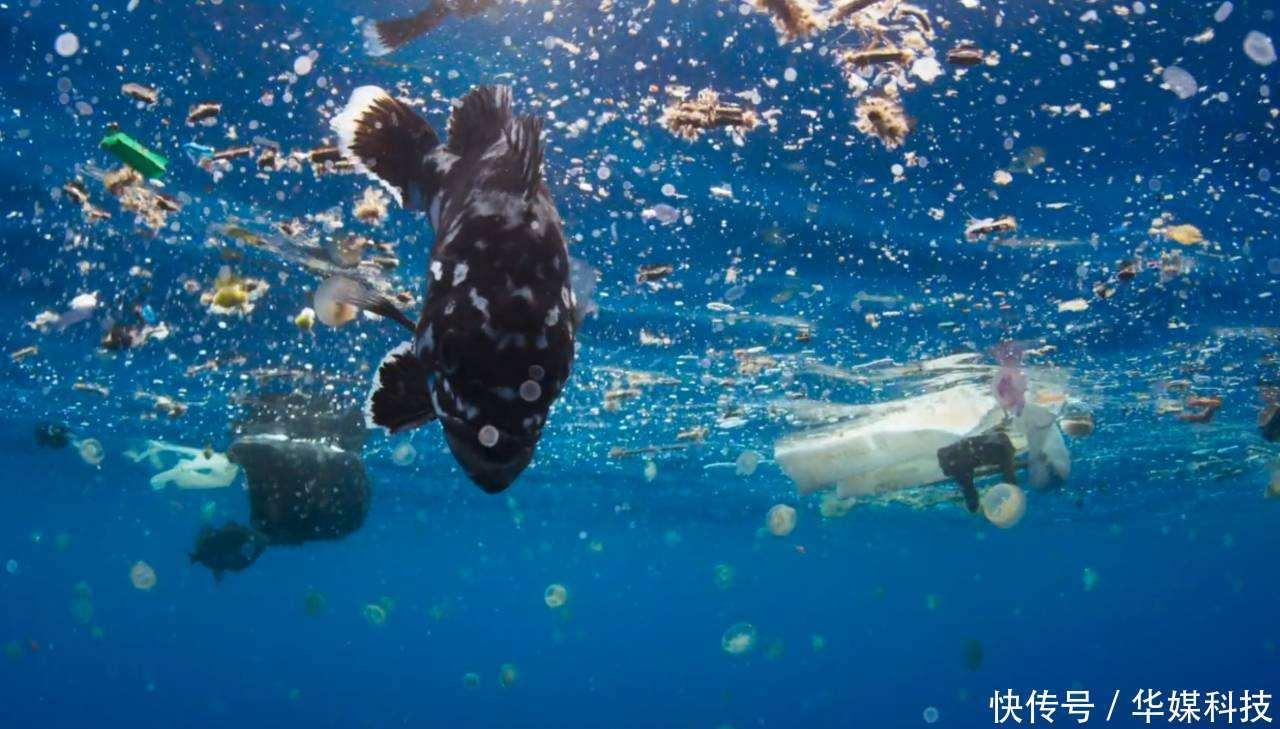 壁纸 海底 海底世界 海洋馆 水族馆 1280_729
