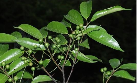 背景 壁纸 绿色 绿叶 树叶 植物 桌面 535_326