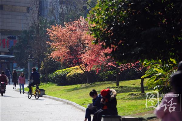 这个周末成都阳光明媚 春天可能真的来了