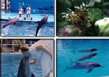 天涯热带海洋动物园_360百科