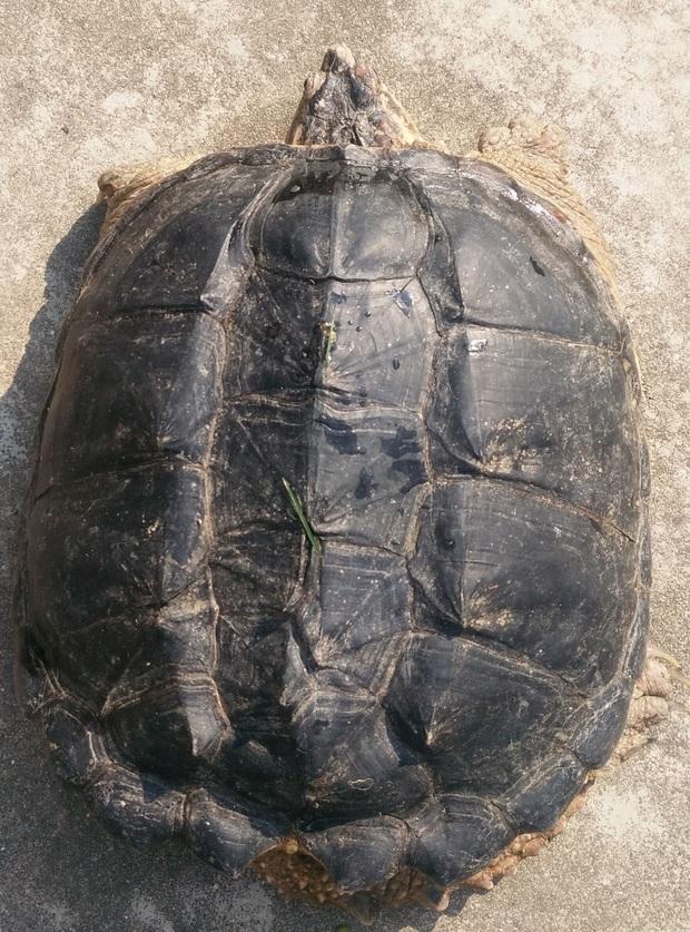 看看这个是什么乌龟如何饲养