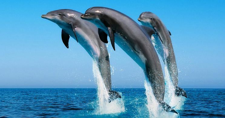 塑料瓶手工制作海豚