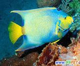 壁纸 动物 鱼 鱼类 163_135图片
