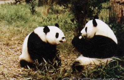 其中国家一级保护动物9种