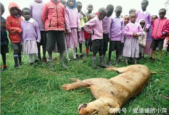 马赛人杀狮子可以杀老虎是不可能的