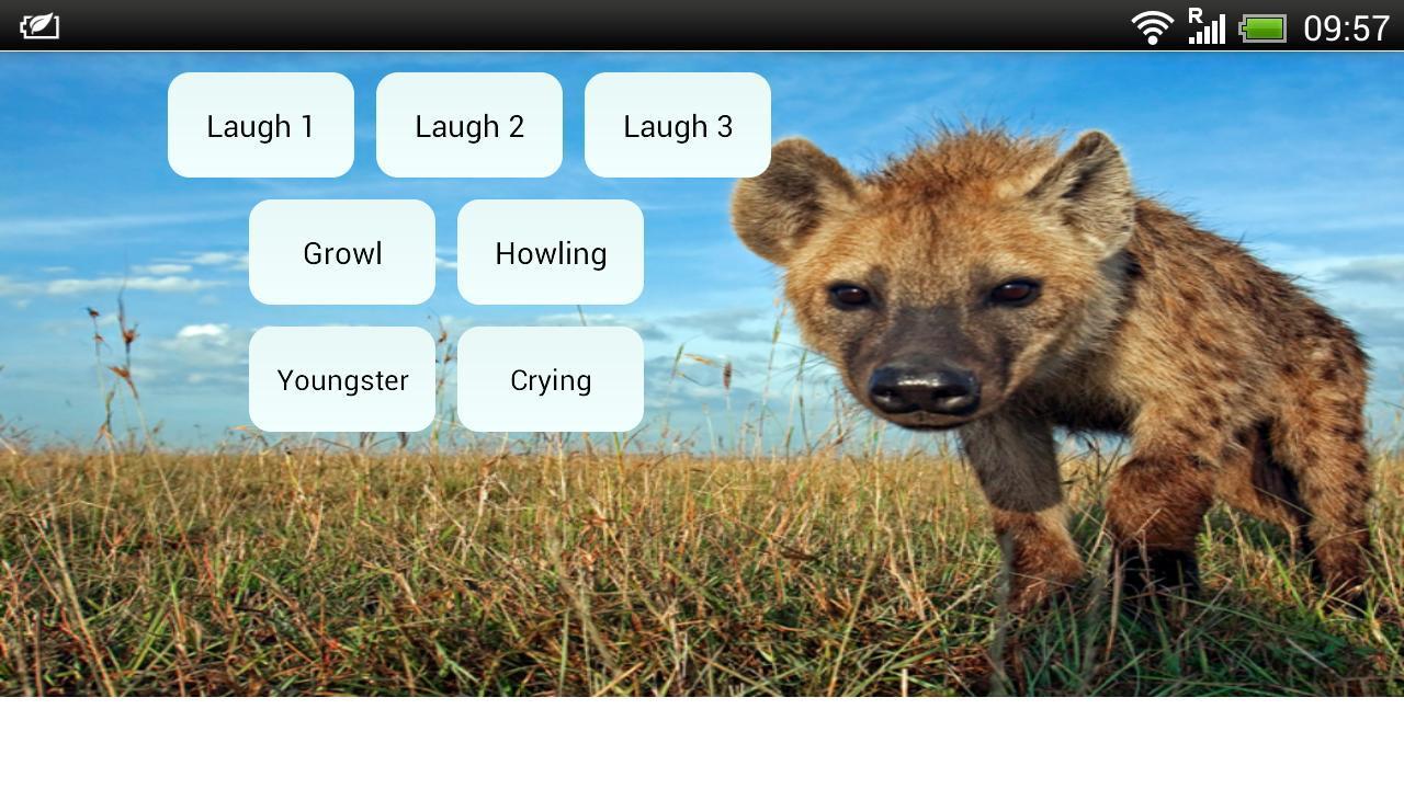 软件 影音图像 >lachende hyenas  bent u fan van de hyena?