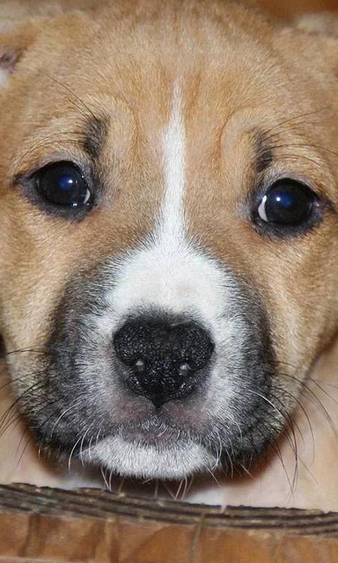 游戏 休闲益智 >美国斯塔福郡梗  狗是世界上最迷人和可爱的动物,他们