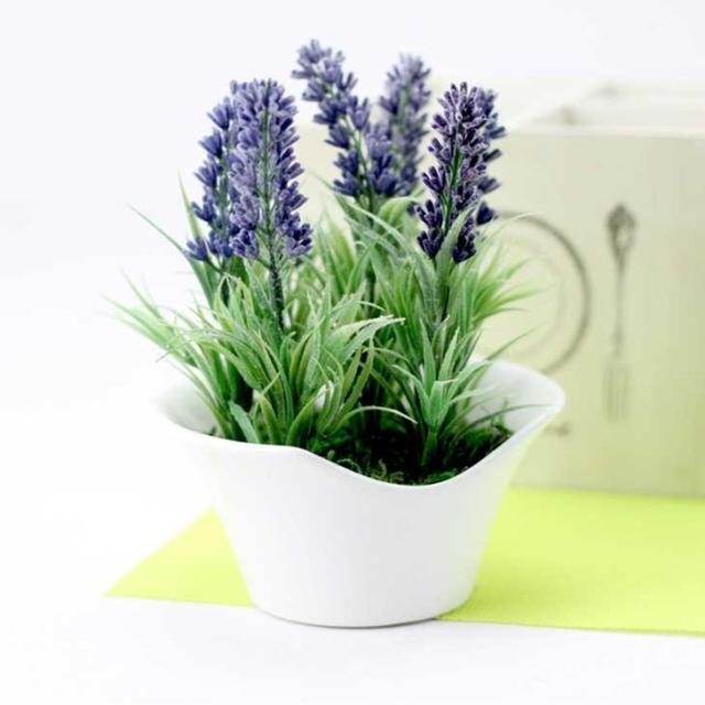 室内花卉怎么养也养不死的技巧 - 平淡无奇 - 平淡无奇博客