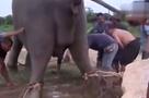 大象生宝宝震撼过程