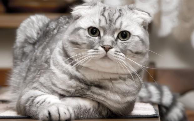 谁知道这个是什么猫