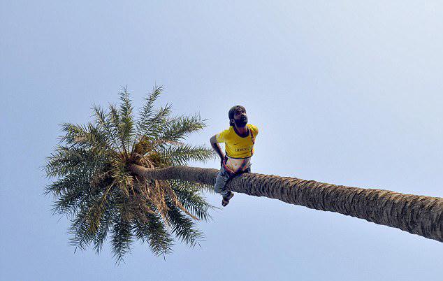 牛人!印建筑工5分钟可倒爬15米高大树 -  - 真光 的博客