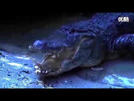 巨蟒大战食人鳄; 巨蟒大战恐鳄; 巨蟒大战食人鳄v.