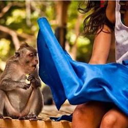 猴哥:你看到什么了