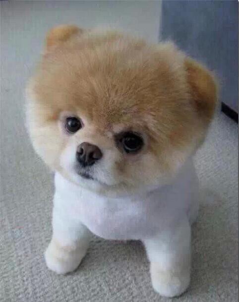 最小最可爱的狗