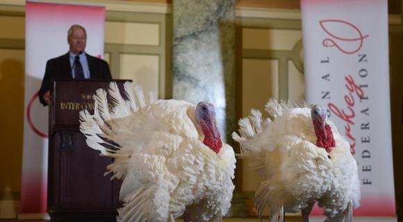 """美国总统赦免""""感恩节幸运火鸡""""亮相华盛顿"""