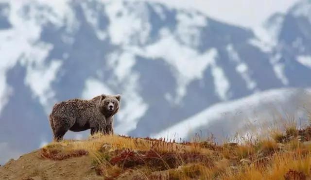 西藏的动物们-湖北省老年大学