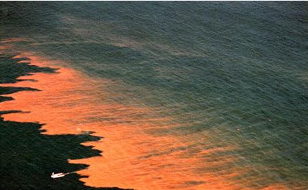 世界上最大的海洋生态系统
