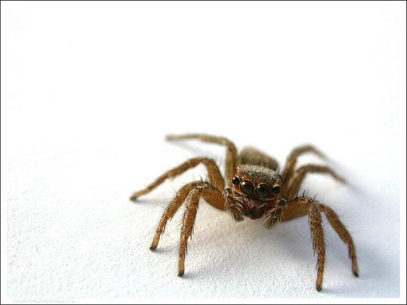 蜘蛛动物最厉害的图片