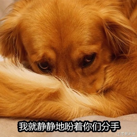 单身狗6.jpg